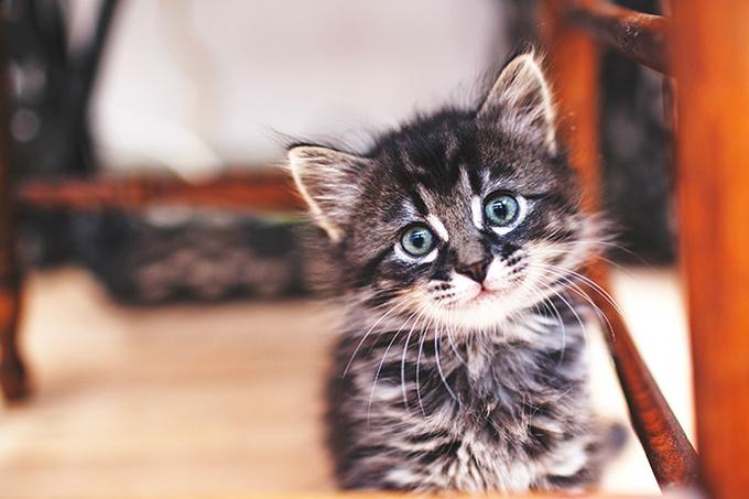 картинки с котиками