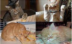 Топ-15 самых забавных саратовских котов. Умиляйся и голосуй!