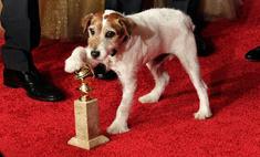 Четвероногие актеры: самые известные животные в кино
