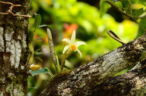 Уход за орхидеей дендробиум