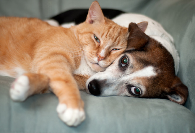 Американские ученые узнали, что собаки благоразумнее кошек
