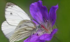 Модное украшение сада: бабочки