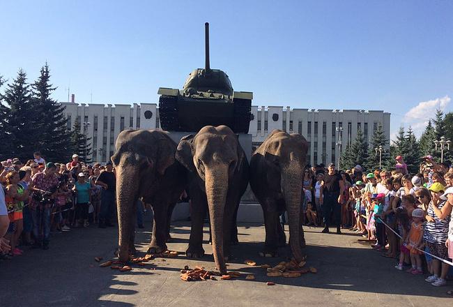Индийские слоны в Нижнем Тагиле, фото