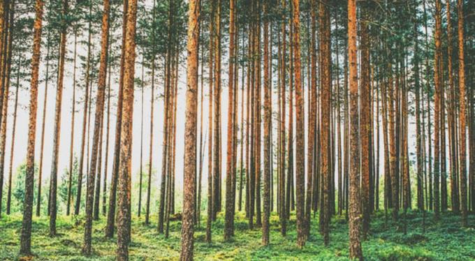 Восстановить лес в «Смоленском Поозерье»: как это сделать и почему это важно