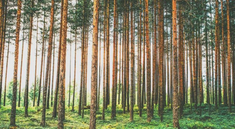 Секс в лесо пасатки