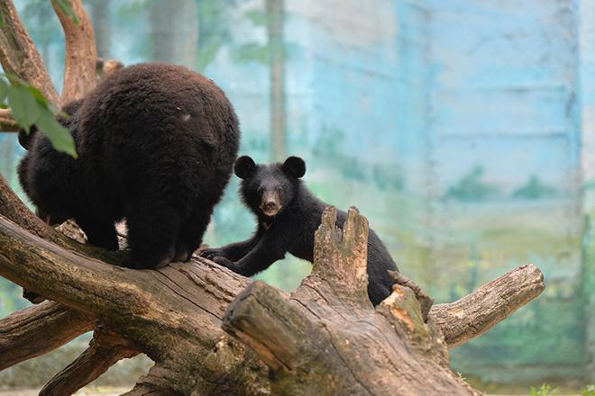 В зоопарке Ростова родился детеныш кошачьего лемура