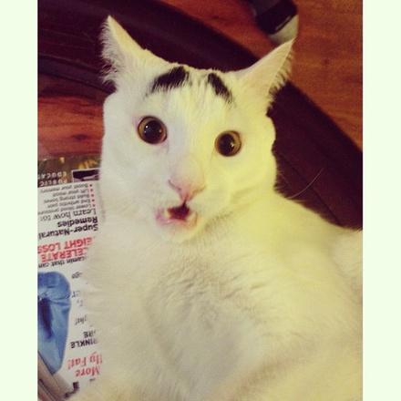 Кот Sam the Eyebrow Cat – Кот Сэм с бровями