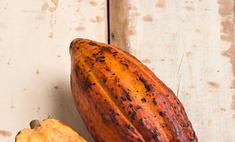 В чем состоит польза и вред масла какао? Как применять средство?