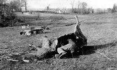 Лежит лошадь— нельзя скушать: как французские снайперы использовали муляжи лошадей