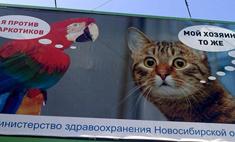 Замурчательный Новосибирск: 5 историй суперкотов