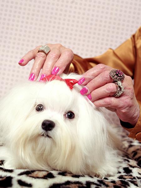 Собака-миллионер фото