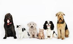Вакцинация домашних любимцев – благо или вред? Советы ветеринара