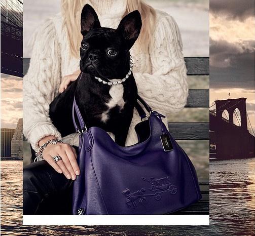 Мисс Азия Кинни в рекламной кампании Coach