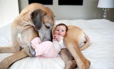 Вы не поверите: что собака сделала с плачущим малышом