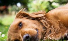 Спасенный японцами пес вернулся к хозяину