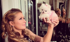 Пэрис Хилтон назвала новую собаку в честь себя