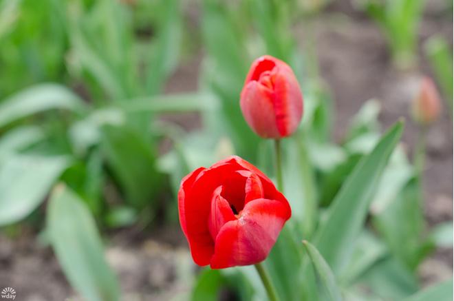 цветы Волгограда
