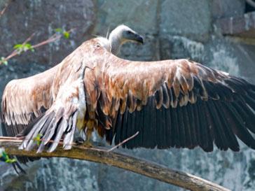 Птицу обвинили в сотрудничестве с разведкой