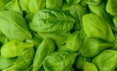 Шпинат – полезная зелень на столе