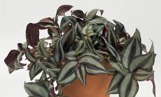 Комнатные растения для ленивых