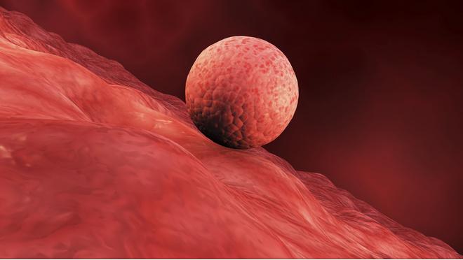 эндометрия и беременность