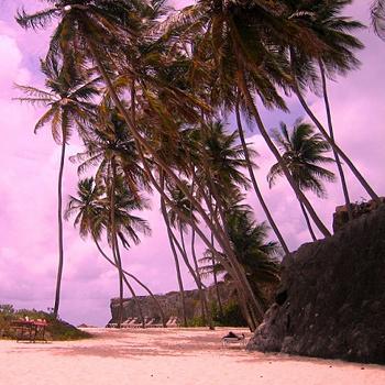 На Барбадосе очень много пляжей с розовым песком, а море у берегов острова считается одним из самых чистых в мире из-за того, что коралловые рифы – это мощный фильтр для воды.