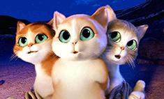 Очаровательные коты Новокузнецка