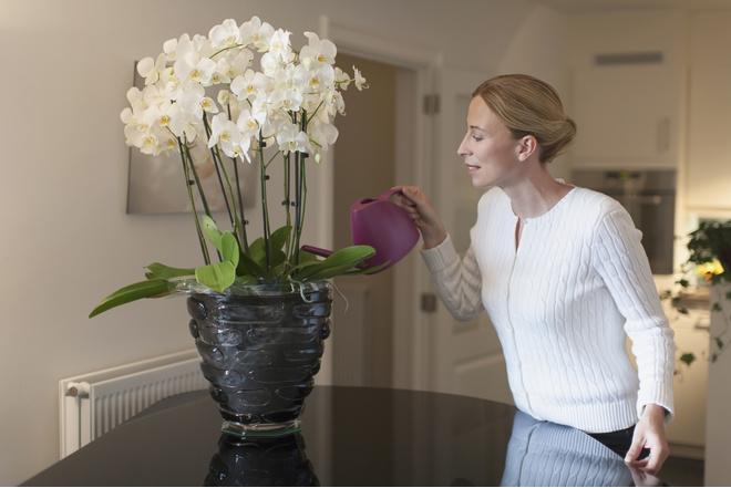Когда выращивать орхидею в домашних условиях