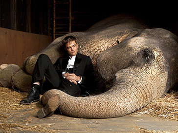 Роберт Паттинсон (Robert Pattinson) и слониха Таи на съемках фильма «Воды слонам!»