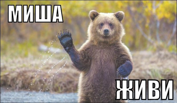 Спасение медведя в Томске