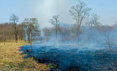 Торфяные и лесные пожары продолжают буйствовать в России