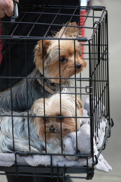 Пистол и Бу – собачки Джонни