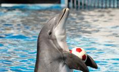 Люди научились разговаривать с дельфинами