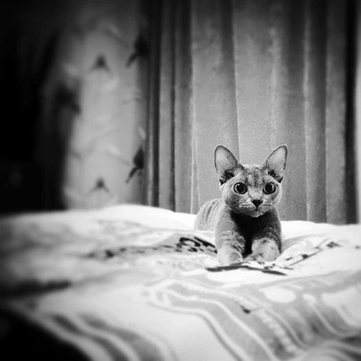 Звездные питомцы: фото, видео, домашние питомцы, Равшана Куркова, кот Клаус