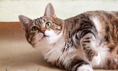 Приют для животных распродает толстых котов