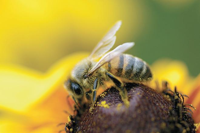 Мед «лесное разнотравье» полезен для желудка