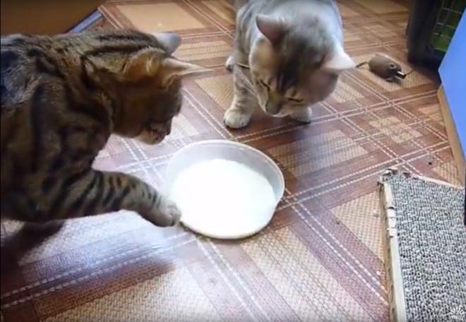 Вежливые котики из Красноярска