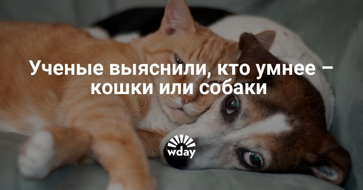 случае кто умнее кошки или собаки белье лучше