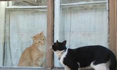 Жители Петербурга отмечают День котов и кошек
