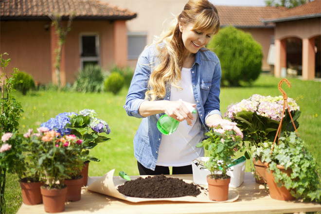 Как вырастить розу из срезанного цветка подробная инструкция