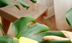 Готовим комнатные растения к лету