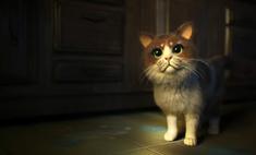 мире ужастик кошек видео