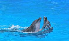Во Франции организовали общество спасения дельфинов