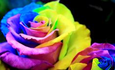 Как покрасить розу в домашних условиях?