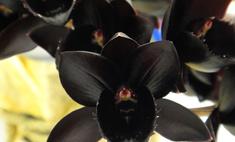 План на праздники: миниатюрные орхидеи и растения-хищники