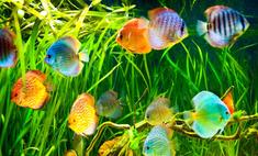 Рыбки аквариумные: о чем могут молчать