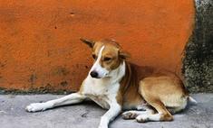 Самая старая собака живет в Японии