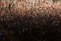 Психология толпы и поведение в толпе: как мы можем себя защитить?