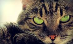 Целительные способности кошки