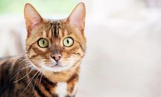 Лучше, чем люди: кошки, которые спасли жизнь своим хозяевам
